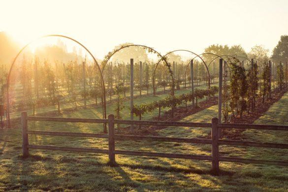 Belmond Le Manoir aux Quat' Saisons' gardens