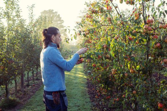 Belmond Le Manoir aux Quat' Saisons' orchard