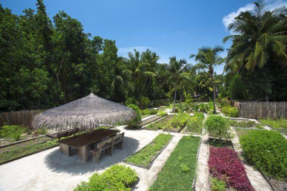 Gili Lankanfushi fruit and vegetable growing project in the resort garden