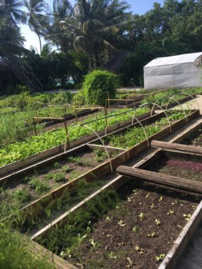 Compost used to grow fruit and vegetables in the resort garden