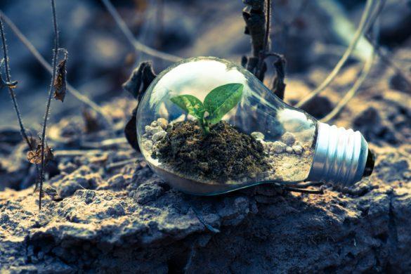 Food waste - environmental awareness - Tidy Planet